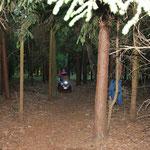 Alleine durch den Wald!