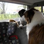 Kontakt zu Hunden und anderen Tieren