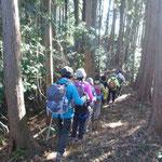 杉林を進む
