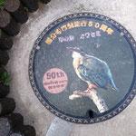 国分寺市の鳥はカワセミなんですね