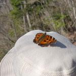 蝶々が帽子に止まったまま逃げない!