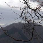 権現山の先に富士山が少し顔をだしたのだが
