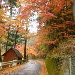 9:47 道路の両側は紅葉真っ盛り