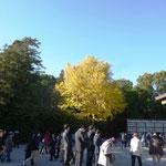 14:09 鎌倉八幡宮のイチョウ