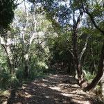 照葉樹林帯の中を歩く