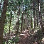 檜林もあります