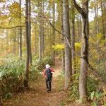 13:10 万坂峠からの樹林帯