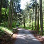 最初は林道歩き