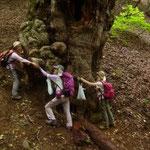 13:41 トチノキの巨樹