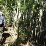 竹林を登る