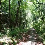 渓流沿いの山道を歩く