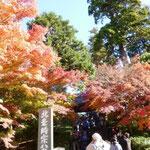 9:50 円覚寺の紅葉は真っ盛り