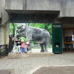 象のはな子の等身大写真