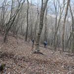 雑木林を歩き
