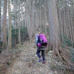 10:34 杉林の中を歩く