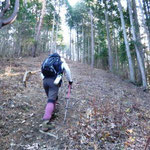 11:33 防火林帯の登山路も急登だ