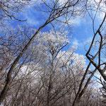 青空に映える霧氷