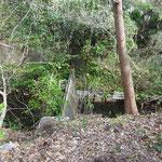 玉川上水の細い流れ