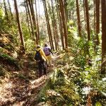 12:40 樹林帯を歩く
