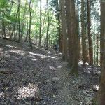 13:58 杉林と原生林の間を歩きます