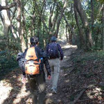 照葉樹林帯を歩き