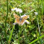 蝶がいっぱいいました