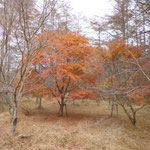 15:05 焼山峠の紅葉