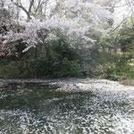 研究所から歩いて20分ほどの姿見の池