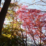 12:46 獅子舞の紅葉④