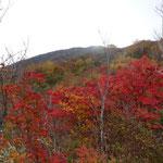 ナナカマドの紅葉は今が真っ盛り