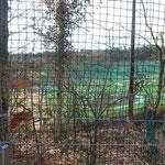 ゴルフ場内の練習場