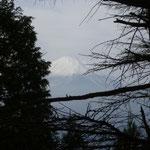 12:03 木々の間から見えた富士山