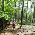カラマツ林の中を歩く