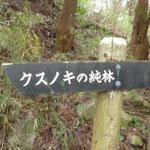 13:03 クスノキの純林の入り口