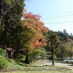 紅葉が始まってます