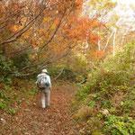 13:25 湿原周回コースの樹林帯を歩く