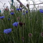 ブドウ畑の脇に花が植えられています