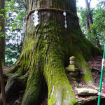 杉の巨木の下に、何だ?