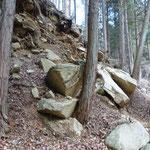 落石を食い止めた杉の木