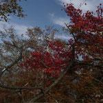 11:44 紅葉してる木も
