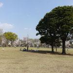 都立武蔵国分寺公園、ここも広い