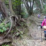 照葉樹林帯を歩く