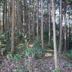 12:55 暗い杉林を登り