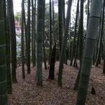 竹林もあります