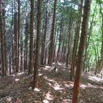 檜林があり