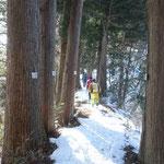 杉林を登り