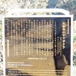 ヤマザクラは東京都の天然記念物