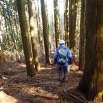 10:16 杉林の中を歩く