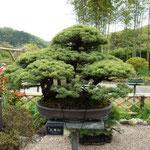 14:32 駒木野庭園の盆栽