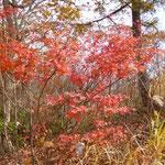 12:40 紅葉真っ盛り